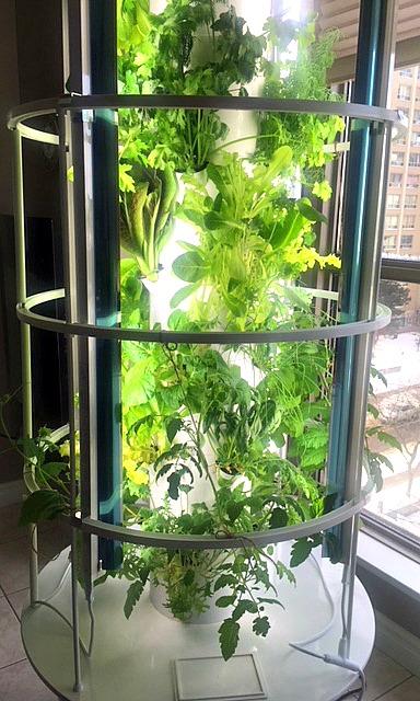 Organic-greens-garden-year-round.jpg